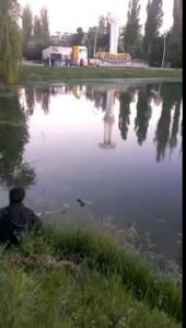 Карп на озере в Гагаринском парке г. Симферополь