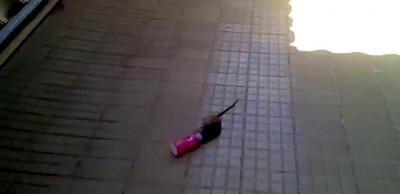 бежала крыса  ...