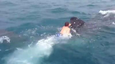 Катай меня, большая акула!
