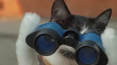 Кошки против зомби