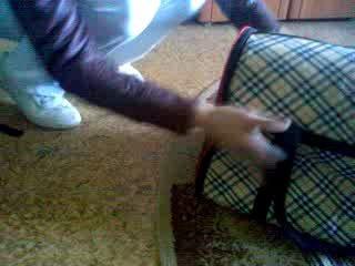 Не дает закрыть сумку-переноску