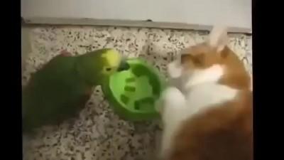 Попугай хам и справедливый кот