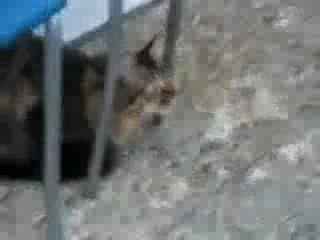 Кот общается с птичками