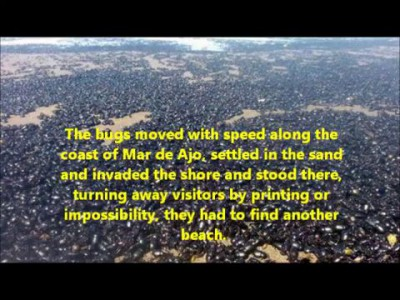 Breaking News: Mysterious Biblical scale Beetle plague' Argentina Beach (26th Feburary 2016)