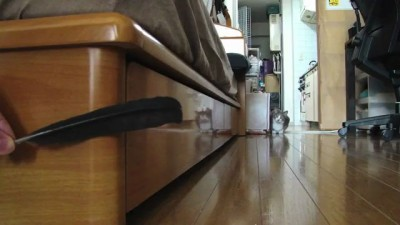 Stalking Cat 2 -