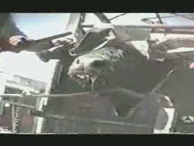 Убийства быков на корриде