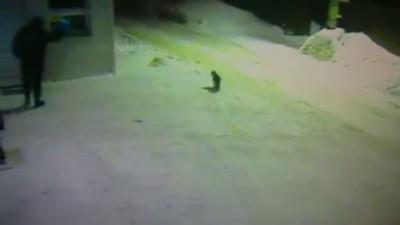 Как мужик коту дорогу показал
