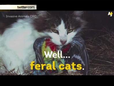 Австралия хочет истребить кошек