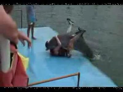 Дельфин отжигает с мужиком