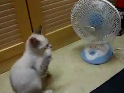 Кот и вентелятор
