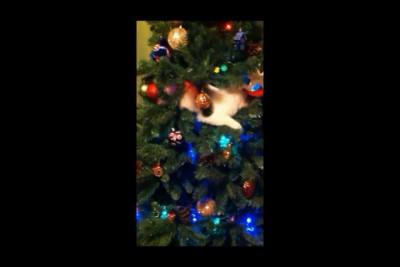 Как украшает ёлку наш кот