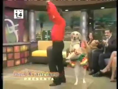 Dog dancing merengue