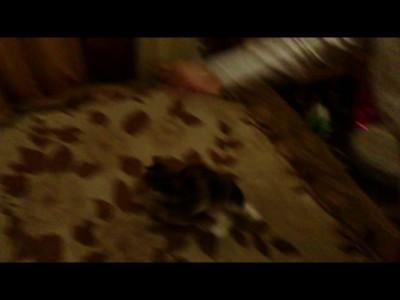 """Котовторник - Наш кот """"Собака"""" (приносит палку)"""