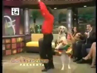 Собака танцует латину