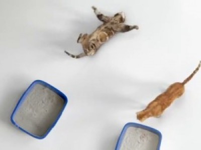 Кот падает в обморок (Light Pass Out Cat)