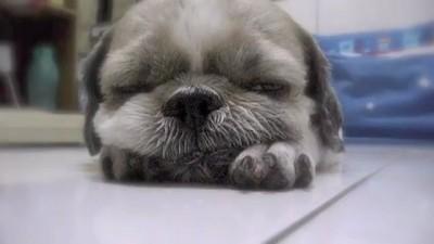 Засыпающий щеночек