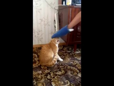Кот епифан рэмпэйдж