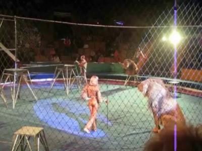 Лев - Король зверей , а не король цирка ...