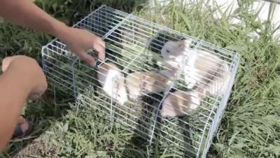 Кролики убийцы.
