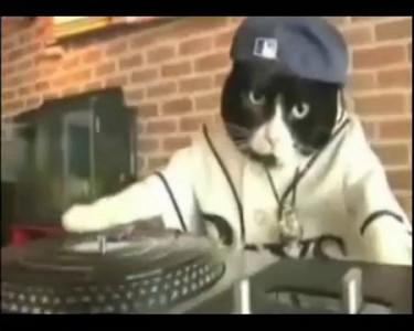Nu Metal Pets play My Way by Limp Bizkit