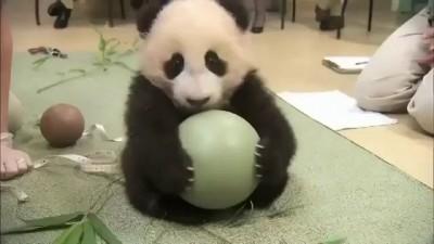 Вредность мягких панд