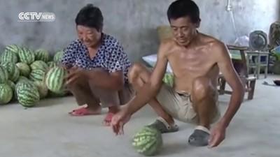 Сверхпрочные арбузы
