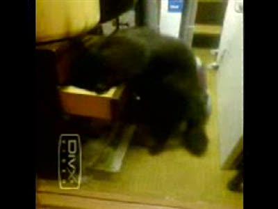 Кошак нашёл валерьяновый чай