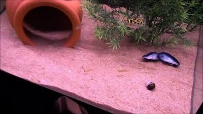 Троллим рыбок