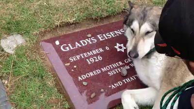 Собака на могиле хозяина