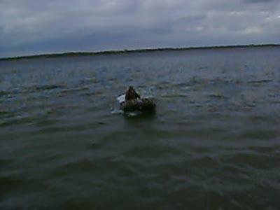 Жучок на воде