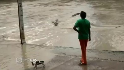 Crocodile warned off by woman and her flip flop in Australia