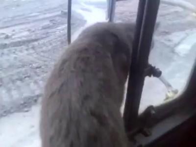 Кот едет на ра6оту