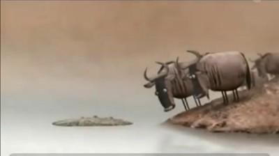 мультфильм про крокодила и глупых антилоп