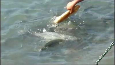 Пацан кормит рыбу хлебом