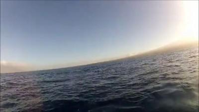 Неожиданная встреча в море