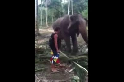 Нокаут от слона .