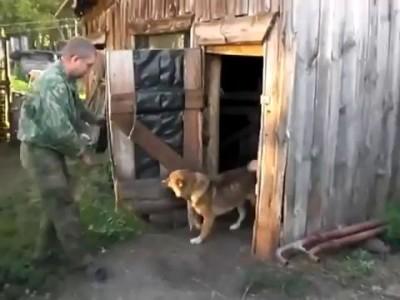 Собака не хочет купаться