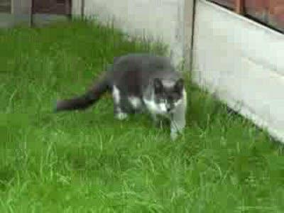 Жесткая кошачья атака!