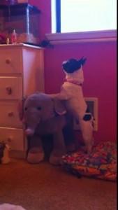 Собака на слоне