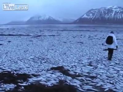 Мор сельди