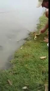 Парень кормит рыбу, которая вылезает за едой на берег — копия