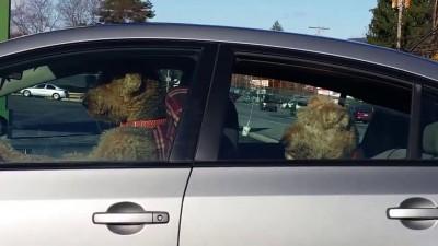 самый нетерпеливый в мире пес
