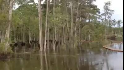 Рзмытый берег , вместе с лесом ушёл под воду .