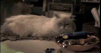 Кот и лампа взаимосвязаны
