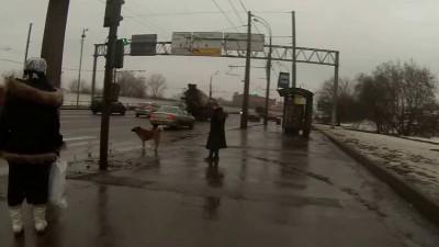 собакен переходит дорогу
