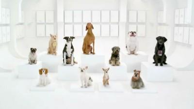 Собаки исполняют Имперский марш
