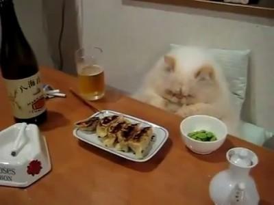 Ужин настоящего кота-гурмана