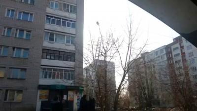 Спасение кота который застрял на дереве , Rescue cat is stuck in a tree