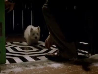 Собачка (Optifog Video - The Dog)