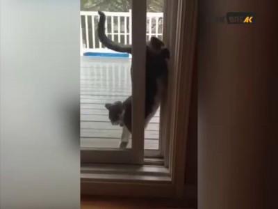 Кот заходит домой